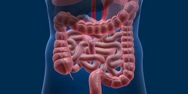 Voici comment les microbes intestinaux peuvent lutte contre le cancer