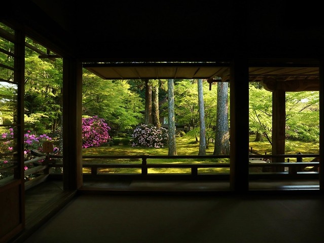 Spring Light / Kyoto Ohara Sanzenin 京都 大原 三千院