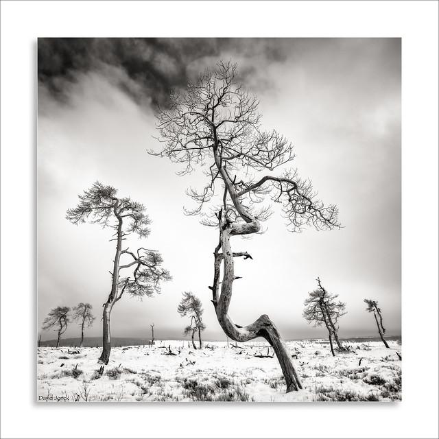 Hautes Fagnes - Noir, Nikon D850, PC-E Nikkor 24mm f/3.5D ED