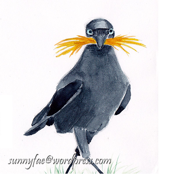 Jackdaw with a Moustache 1