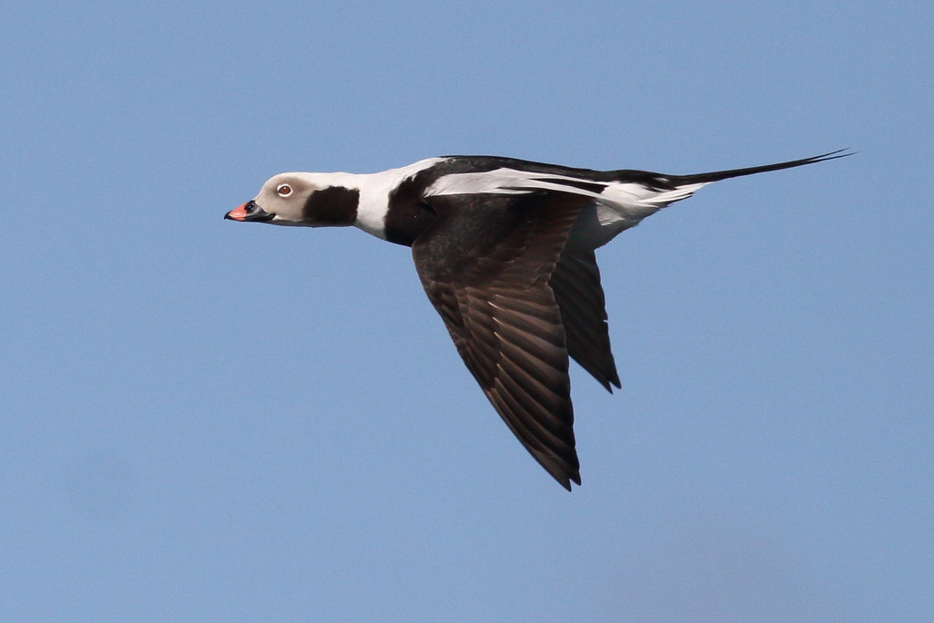 Ottenby's birds