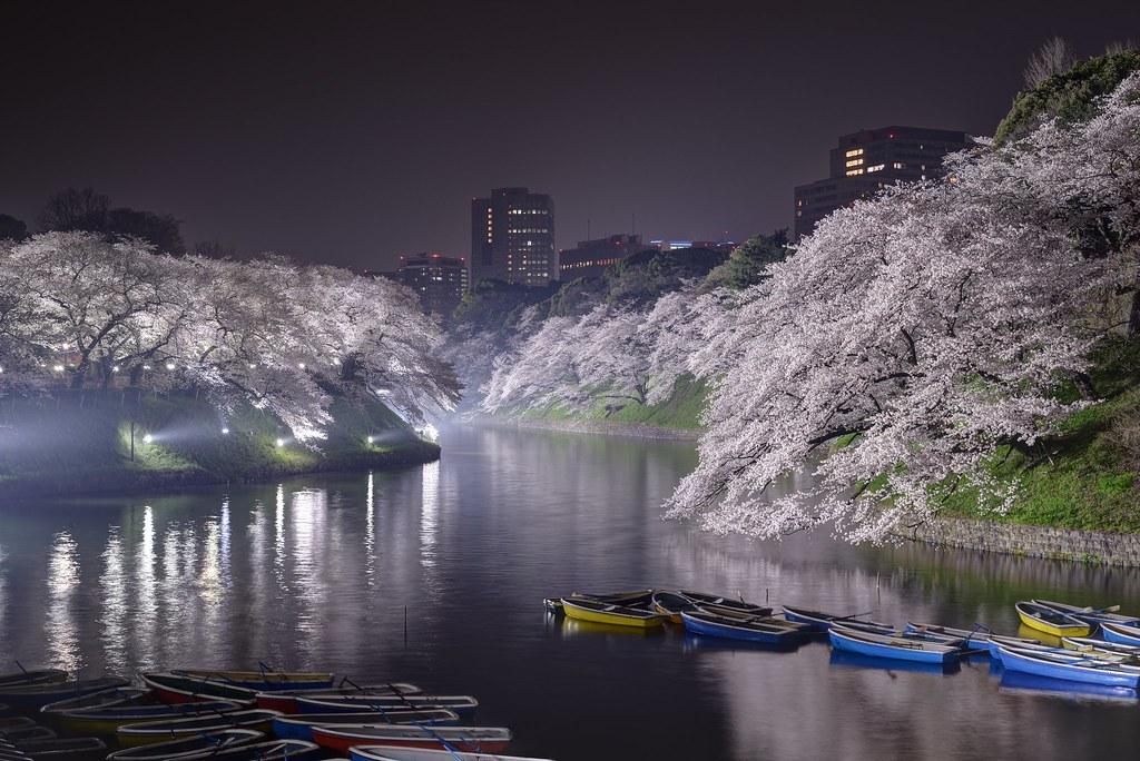 Cherry blossom at Chidorigahuchi