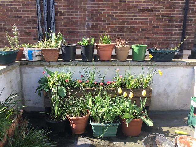 My Garden 18/04/20 (01)