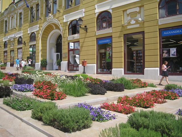 flowers in Pecs, Canon DIGITAL IXUS 960 IS