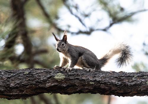 aberts_squirrel-20180411-114