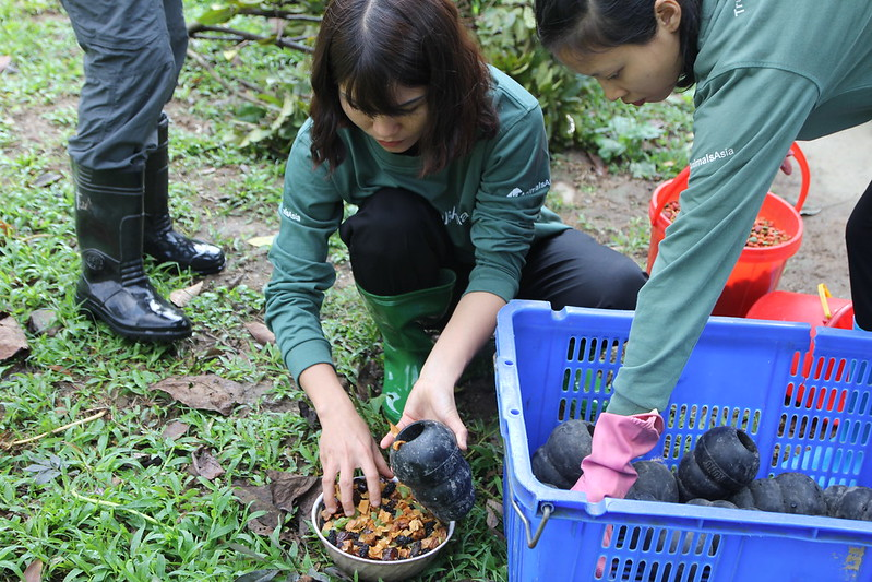 Long putting food into a puzzle feeder with Animals Asia bear workers