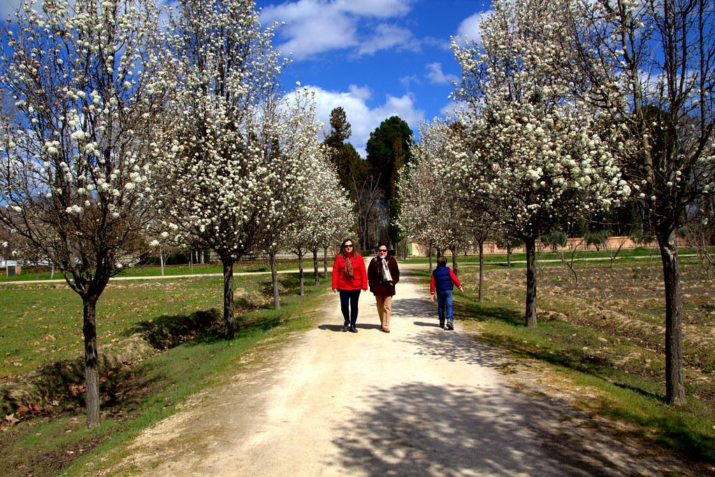 Paseo matutino del Jueves Santo de 2018 por los Jardines del Príncipe en Aranjuez