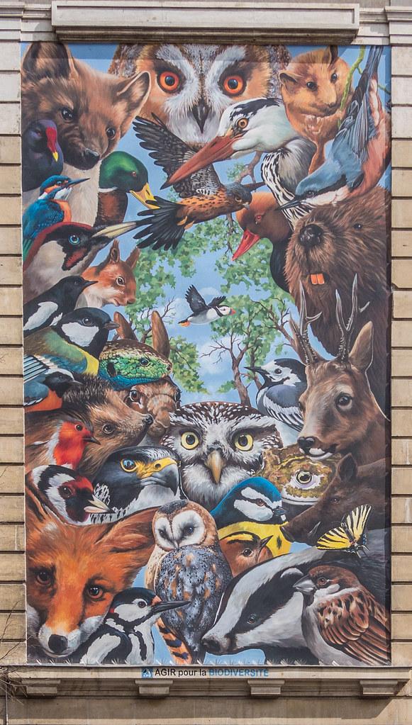 Street art lyonnais...et M.Paul 41099259741_9a6b98d821_b