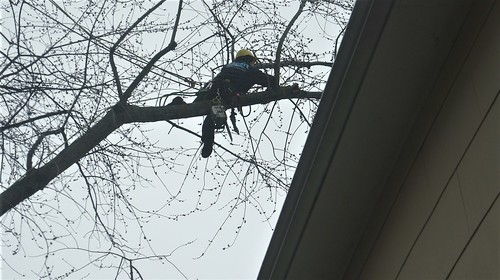 At Home: Tree Work Spring 2018