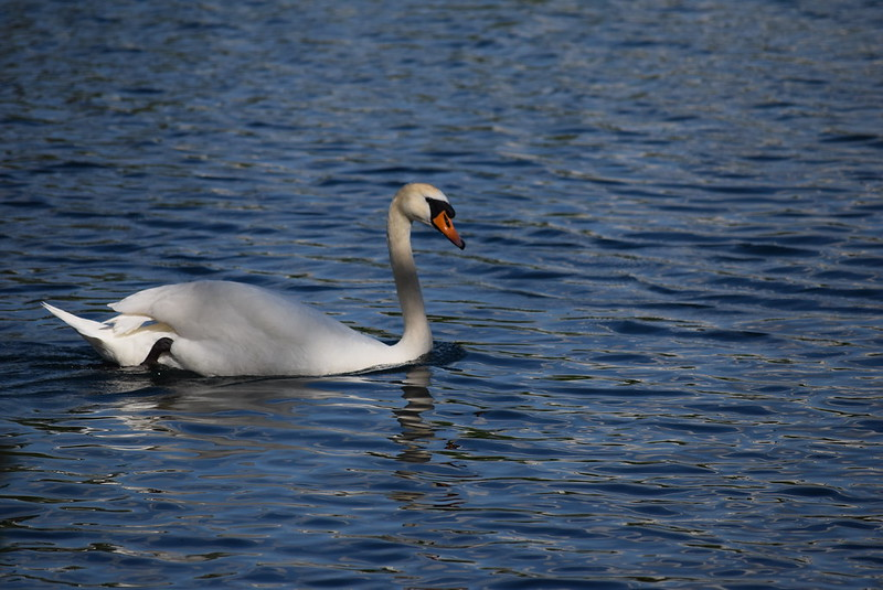 Swan 24.05 (3)