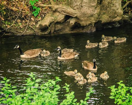 Rush Hour on the creek