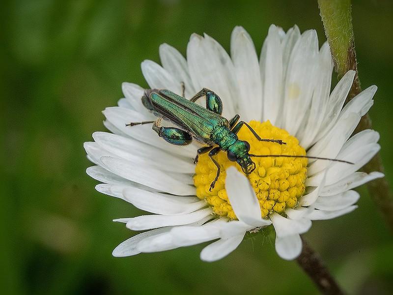 Insecte robot... (nouvelle version) 42412601061_6b4559656c_c