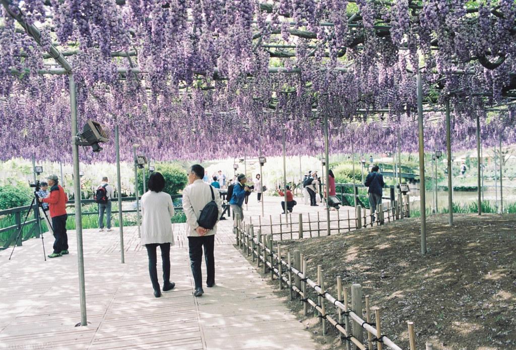 2018-05-20 藤の色 001-3