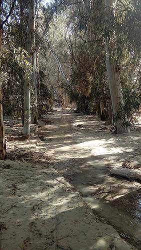 Nuevo cauce del Río Corbones. Villanueva de San Juan