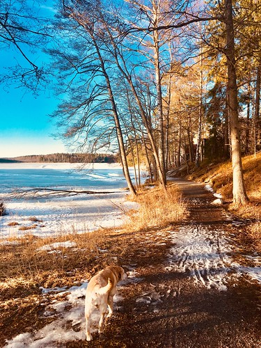 dog walk, sweden, march 2018