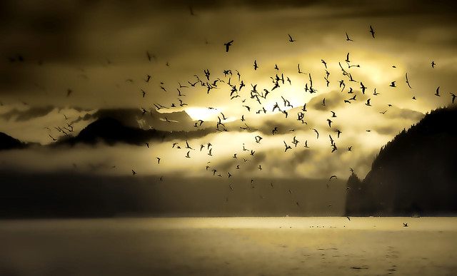Alaskan Flock
