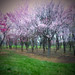 Springtime by Zsaj