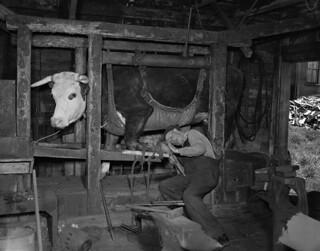 George Gould, blacksmith, Yarmouth, Nova Scotia / George Gould, forgeron, Yarmouth (Nouvelle-Écosse)