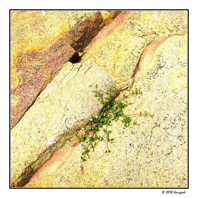 tiny grass grows on rockbed