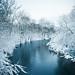 Winter's Dead