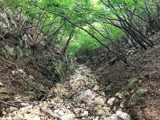 仙ヶ岳 白谷道 枯沢