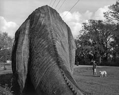 Brontosaurus Interruptus