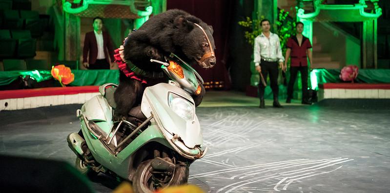 A bear riding motorbike