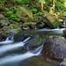 McDowell Creek cascade2-8246 by Wayne~Chadwick