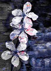 flowers on broken paint