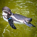 <p><a href=&quot;http://www.flickr.com/people/28703702@N08/&quot;>djsmith46</a> posted a photo:</p>&#xA;&#xA;<p><a href=&quot;http://www.flickr.com/photos/28703702@N08/42024071185/&quot; title=&quot;Berlin Zoo-23&quot;><img src=&quot;http://farm1.staticflickr.com/875/42024071185_c23dc19642_m.jpg&quot; width=&quot;180&quot; height=&quot;240&quot; alt=&quot;Berlin Zoo-23&quot; /></a></p>&#xA;&#xA;<p>OLYMPUS DIGITAL CAMERA</p>