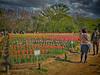 Photo:チューリップの花園で V By jun560