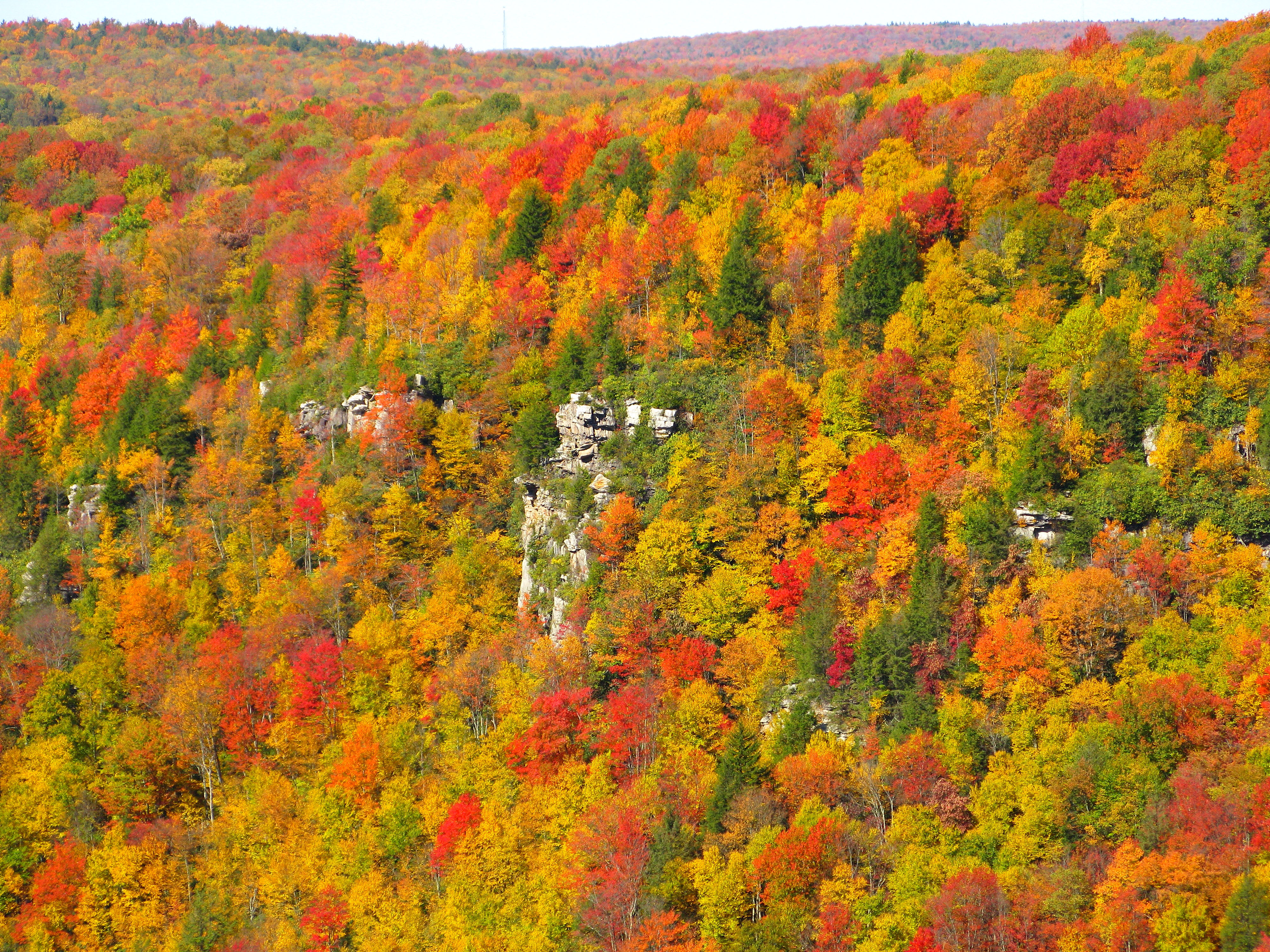 Fall colors in Blackwater Canyon, West Virginia. Photo taken on October 10, 2008.