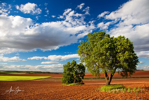 The poetry of earth (Castilla la Mancha, Spain 2013)