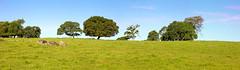 Ridgeline-Panorama