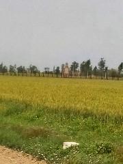 Kos Minar at Raja Thal
