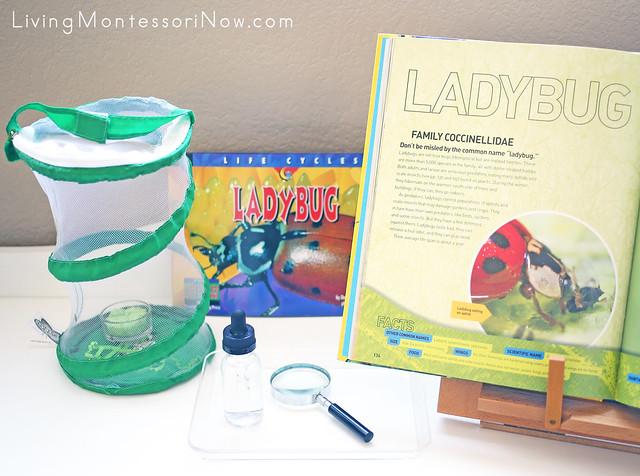 Growing Ladybugs Activity Plus Life Cycle of a Ladybug References