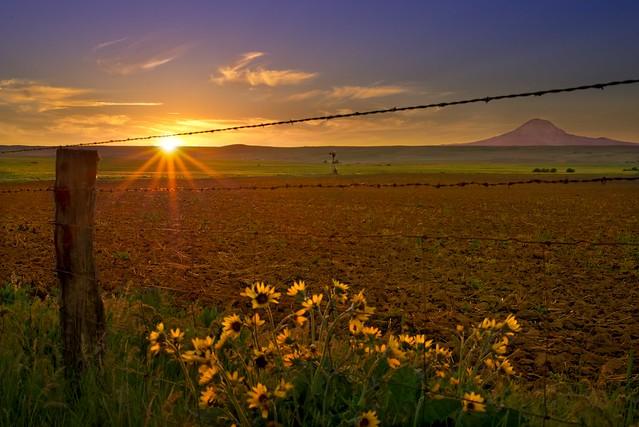 Klickitat County Field Sunset 1554 F
