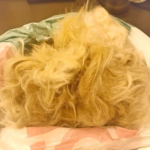 初カットの毛