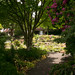 Branklyn Garden, Perth  50