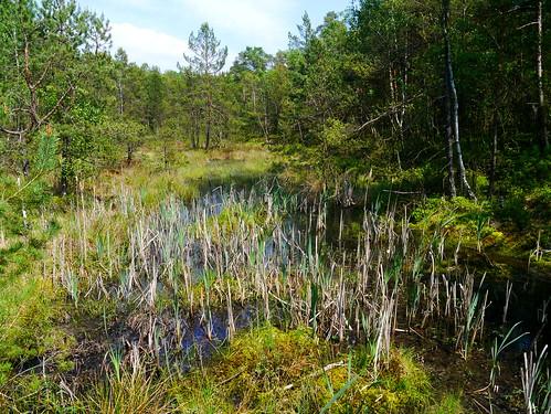 Moor-Landschaft / Moor landscape