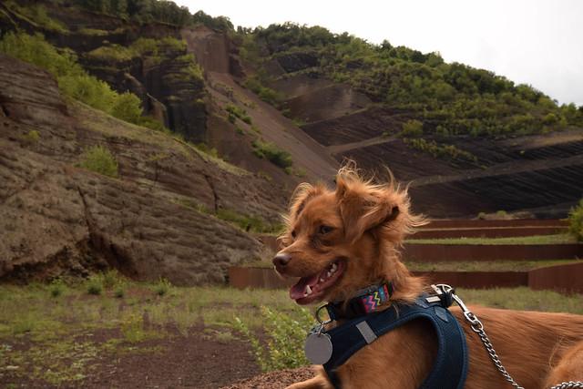 Laika al Volcà Croscat, Nikon D5300, Sigma 10-20mm F4-5.6 EX DC HSM