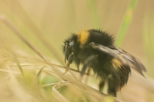 Bumbling About In The Grass