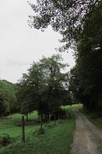 20120925 27 144 Jakobus Wald Weg