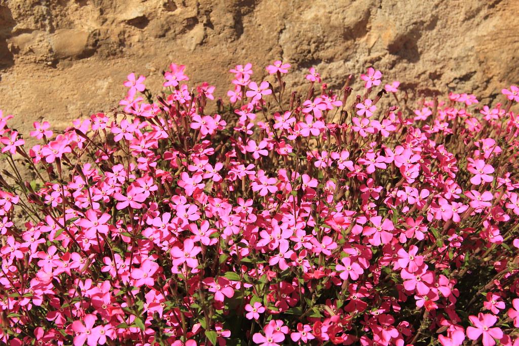 Flowers, Besalu