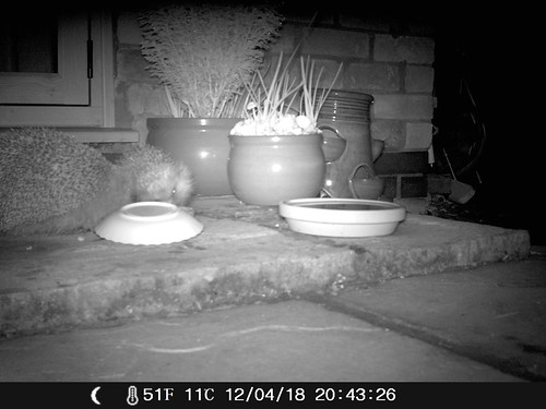 Hedgehogs On The Doorstep