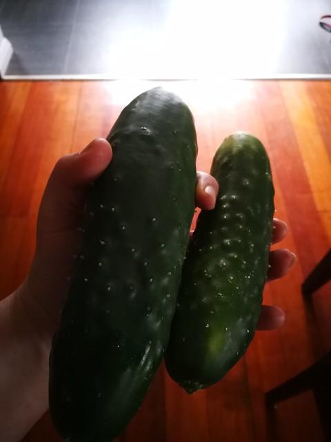 2 individual cucumbers