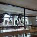 Lapworth Museum of Geology - University of Birmingham - Allosaurus