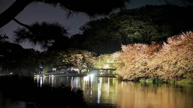 DSC07876-01三渓園観桜の夕べ