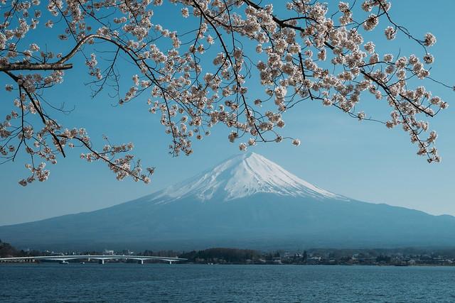 Photo:桜と富士と河口湖 By kzy619