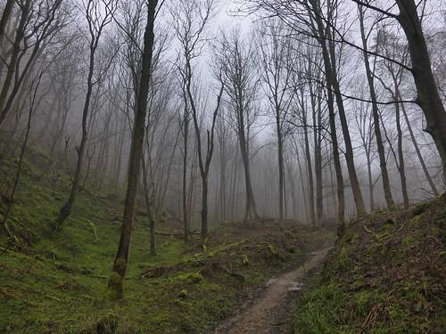 Arnecliffe Woods